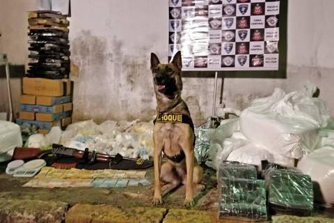 Cadela Dara entre os 727 kg de droga recolhidos de barraco em Paraisópolis, na zona sul de SP