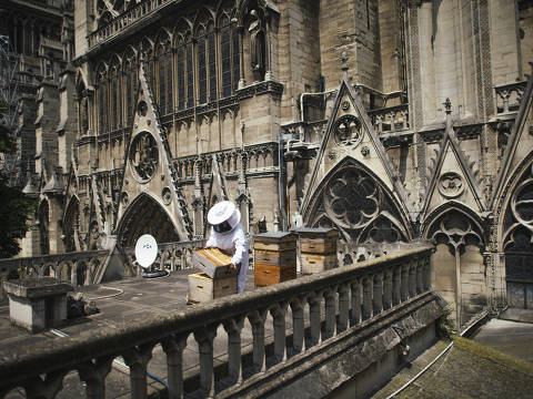 Sibyle Moulin, a beekeeper, tending to bee hives on the roof of Notre-Dame in Paris, May 22, 2018. Paris has seen a marked rise in urban beekeeping, with more than 1,000 hives atop landmark buildings as well as in community gardens across the city. (Dmitry Kostyukov/The New York Times) ORG XMIT: XNYT147