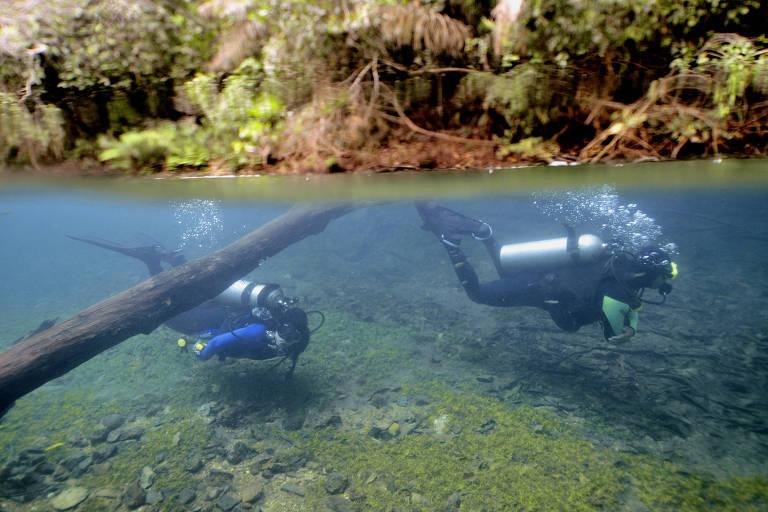 Dupla mergulha em águas cristalinas do rio Prata, em Bonito (MS)