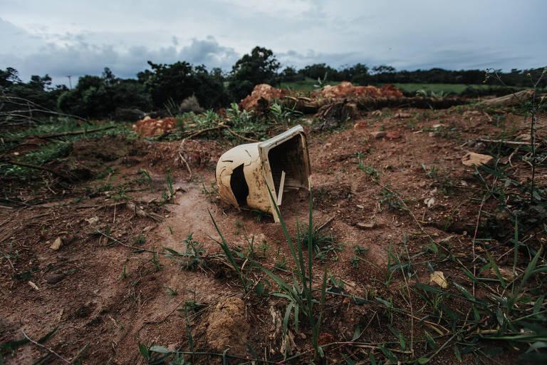 Vegetação em Brumadinho (MG)