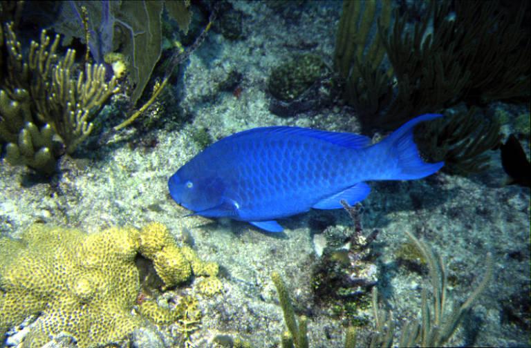 Peixes ameaçados de extinção