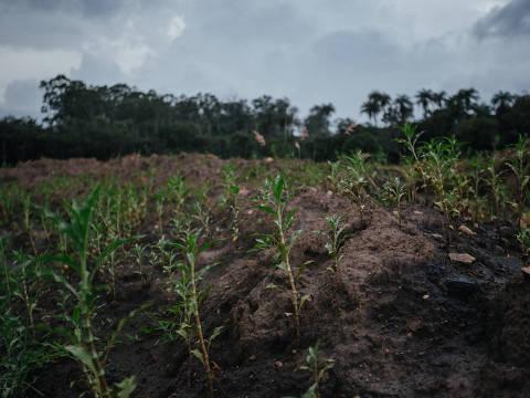 BRUMADINHO,MG,BRASIL - 15-04-2019 - Vegetação começa a nascer em meio a lama de rejeitos de mineração no Corrego do Feijão em Brumadinho após tres meses do rompimento da barragem da Vale. (Foto: Tuane Fernandes/Farpa) EXCLUSIVO FOLHA - PROIBIDO O USO SEM AUTORIZAÇÃO DO NUCLEO DE IMAGEM