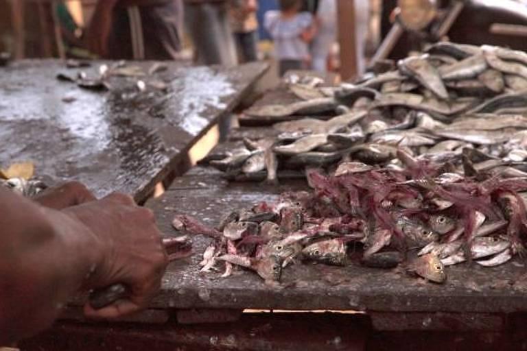 Na Venezuela, 24 kg de sardinha são trocados por um pacote de leite em pó