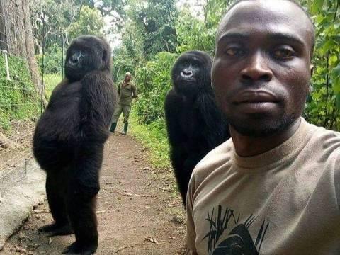 Os dois gorilas que aparecem nas imagens perderam as mães quando ainda bebês e foram salvos por guardas florestais