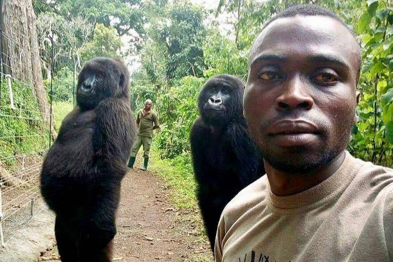 homem tira selfie em que aparece, em 2o plano, duas gorilas pretas, do tamanho de homens adultos, em pé e com as mãos atrás das costas, em postura que lembra a de humanos