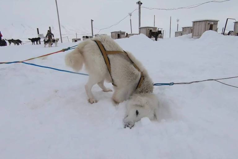 O casal que mora com 110 cachorros no Ártico