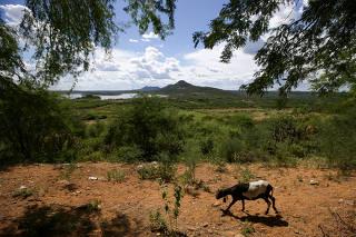 BA - Chuvas mudam paisagem do sertão
