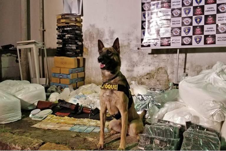 Cães policiais