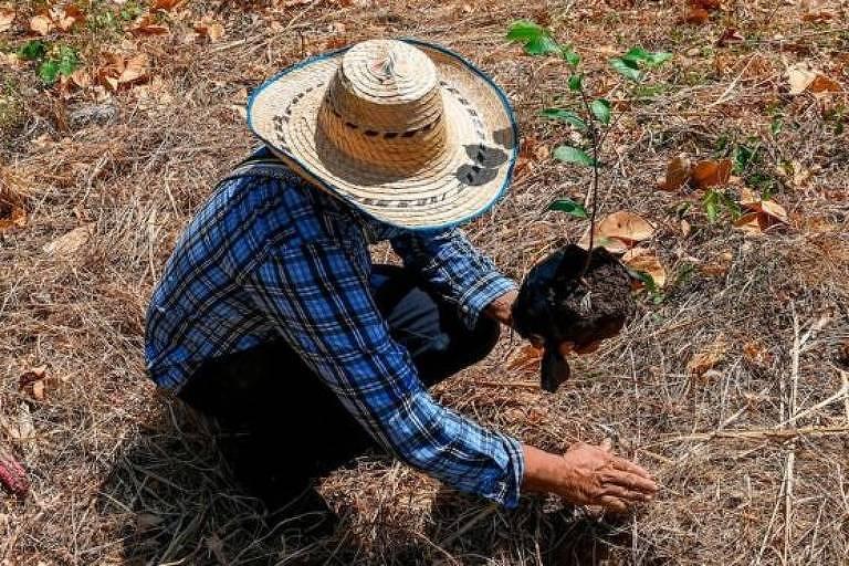 Como a 'agricultura verde' da Europa pode prejudicar ambiente no Brasil