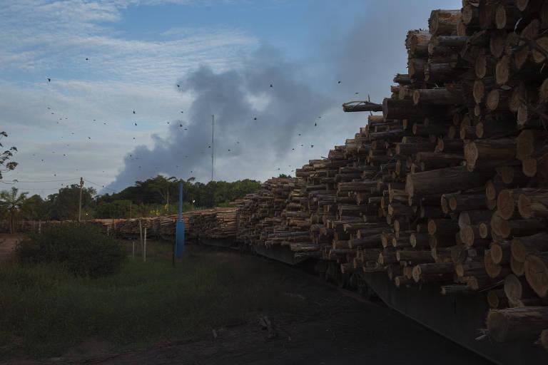 Trem carregado com eucalipto do Projeto Jari, em Laranjal do Jari (AP)