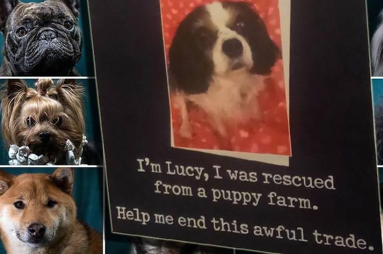 A comovente história de Lucy, cadela maltratada que inspirou nova lei sobre compra de cães no Reino Unido