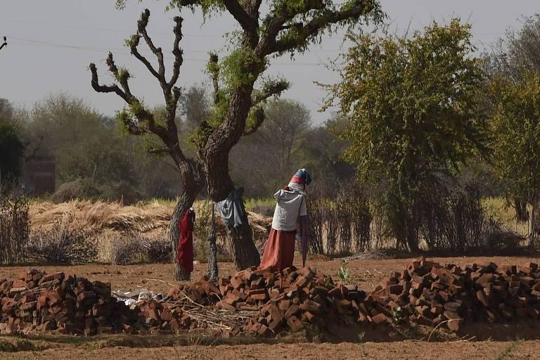 Espantalho é visto em uma fazenda na tentativa de afastar vacas errantes em Pilani, no Rajastão