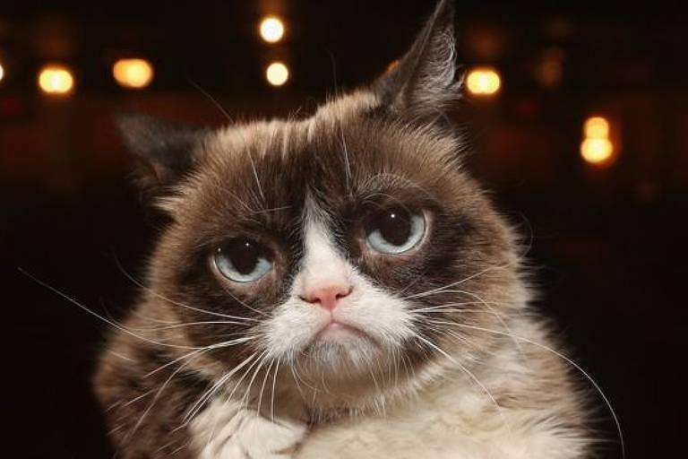 Tardar Sauce, conhecida como Grumpy Cat (gata rabugenta) morreu na terça-feira