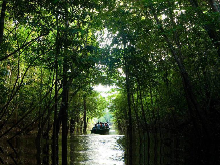 """Cena de """"Amazônia, o Despertar da Florestania"""""""