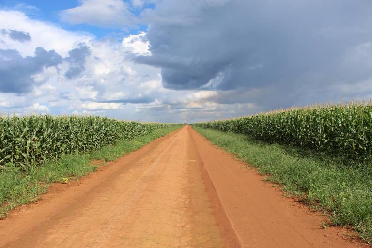 Plantação de milho em terra dos índios parecis, em Campo Novo do Parecis