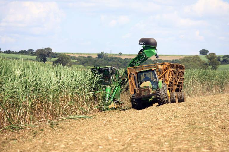 Funcionários de usina colhem cana em plantação