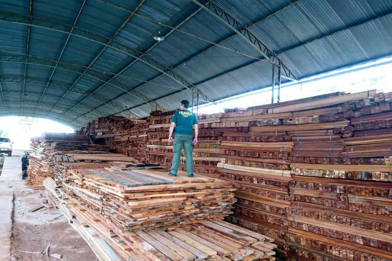 Ibama faz apreensão de madeira ilegal proveniente de terras indígenas do Pará