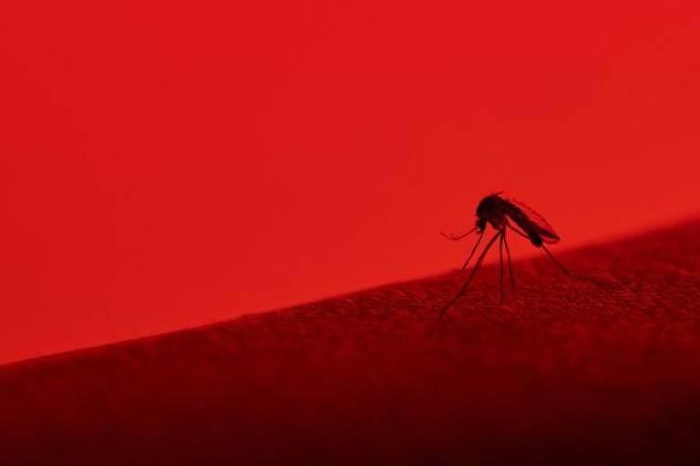 Pernilongo em fundo vermelho
