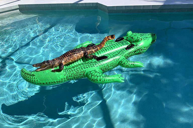 Dave Jacobs, morador da Geórgia, e sua família encontraram um jacaré relaxando em uma boia de piscina em forma de jacaré, em Miami