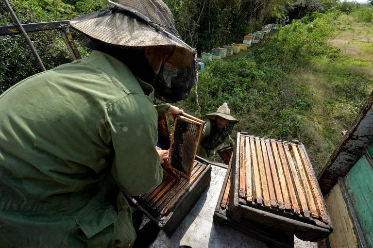Apicultores carregam um caminhão com colmeias de abelhas em um apiário em Navajas, província cubana de Matanzas