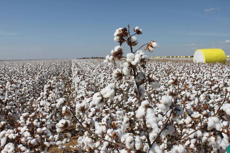 Plantação de algodão em Cristalina (Goiás); em 30 anos, produtividade triplicou, e país passou a ser grande exportador