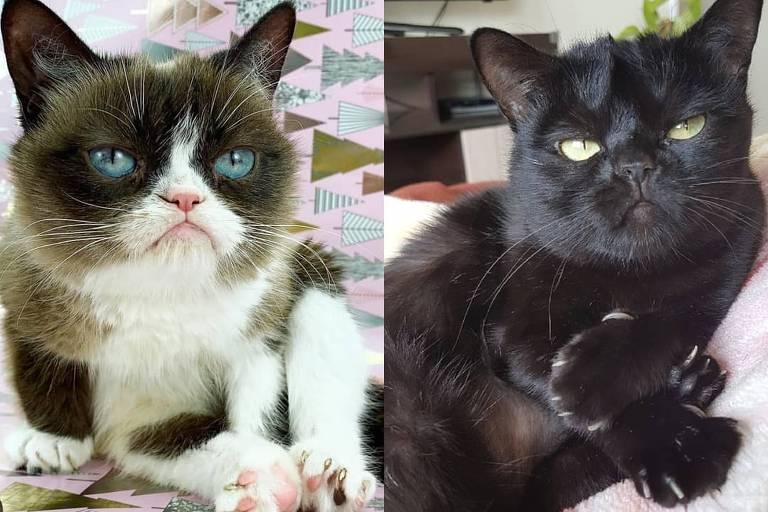 Com carinha de brava, gata Francisquinha tem milhares de fãs nas redes sociais