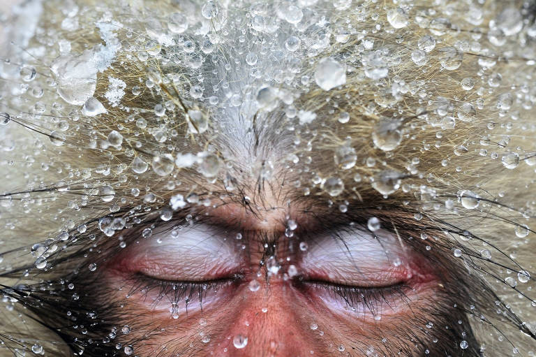 Fotos vencedoras do concurso Wildlife Photographer of the Year