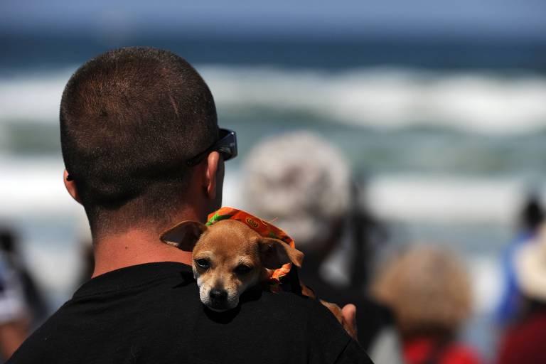 Ask Ariely: o que fazer quando a namorada pede para se livrar do cachorro?