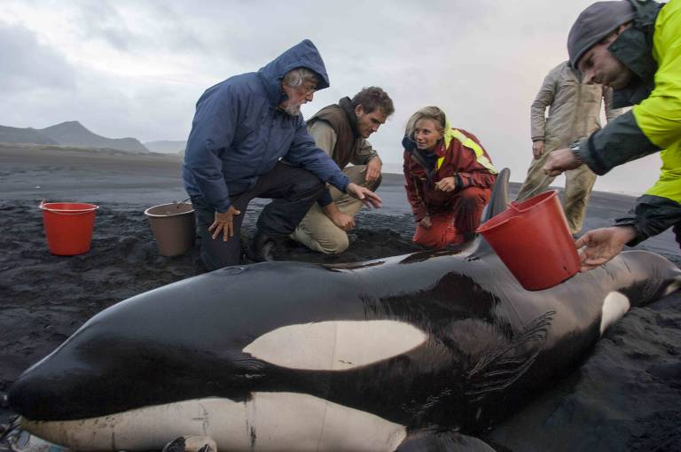 Pessoas com agasalhos em volta de orca, em praia