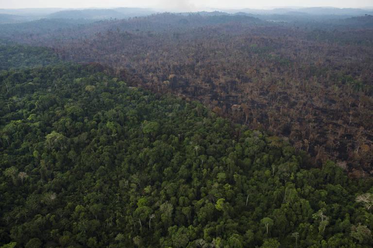 Área de floresta derrubada próximo à BR-163 em Itaituba (PA)