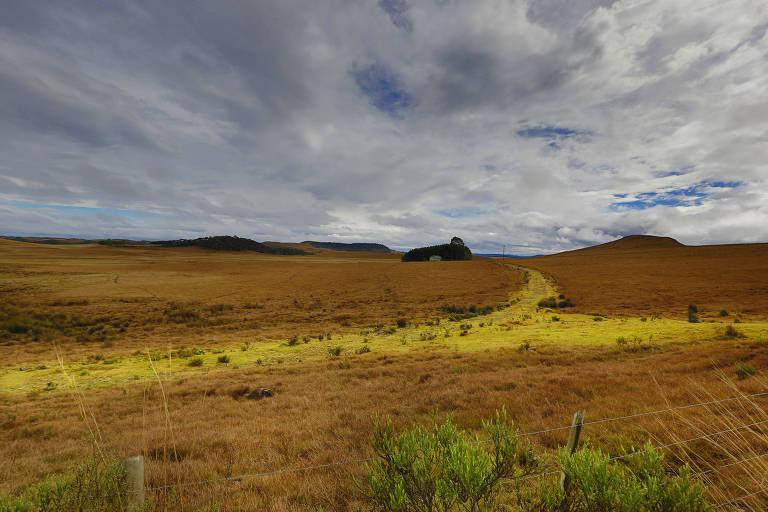 Pampas gaúchos