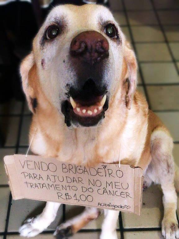 Apolo é um cãozinho idoso, de 11 anos, que enfrenta tratamento após o surgimento de três tumores