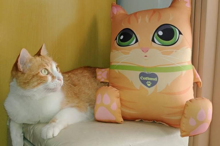 Gato amarelo e branco deita ao lado de almofada em formato de gato amarelo