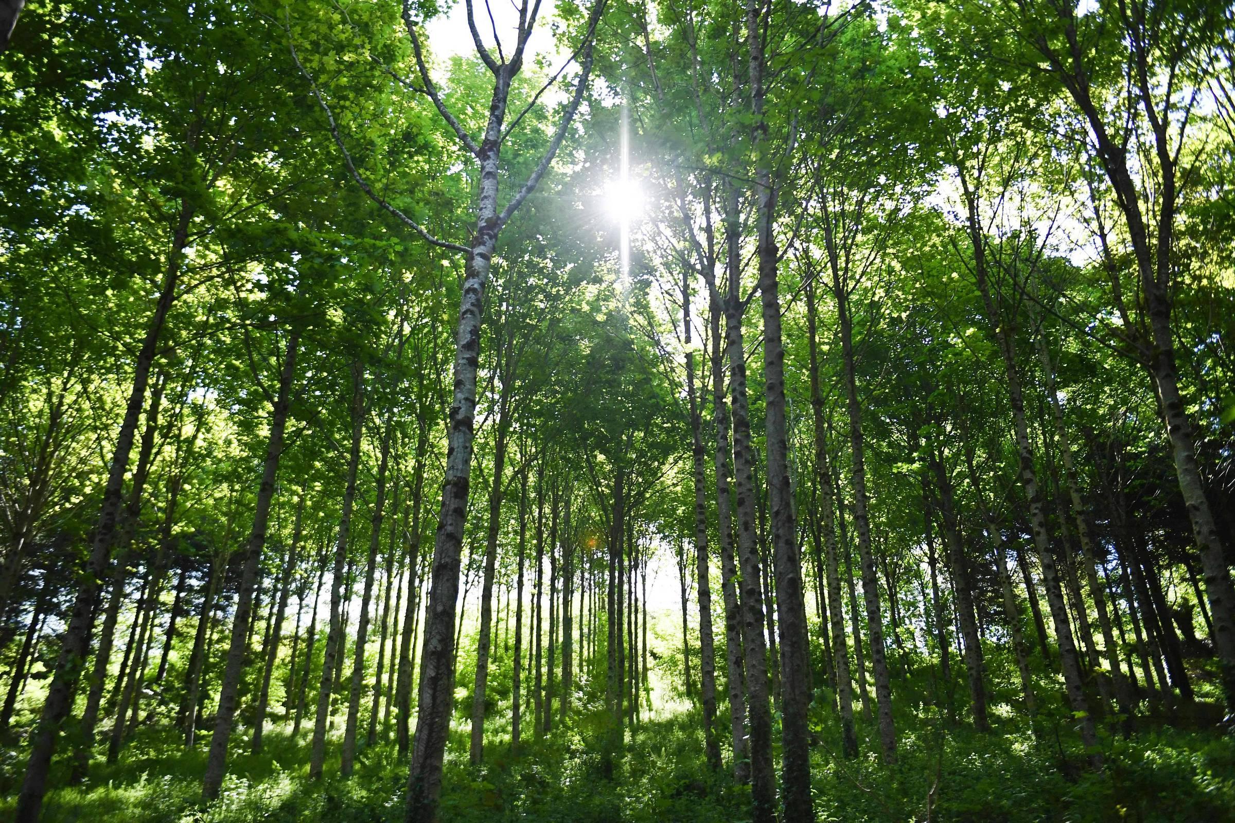 Resultado de imagem para 'Internet' das florestas está ameaçada pelo aquecimento global