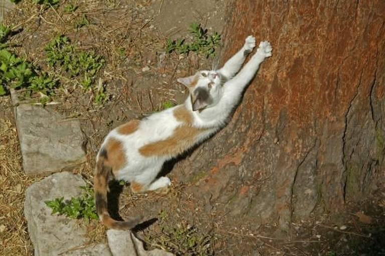 Gatos precisam de longos e amadeirados objetos para arranhar
