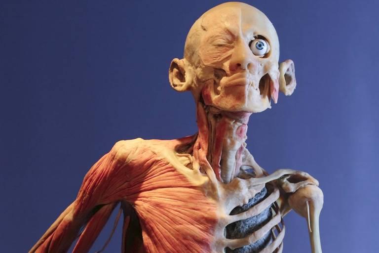 """Corpo preservado de um fumante com o pulmão esquerdo a mostra na exposição """"Corpo Humano: Real e Fascinante"""", em SP"""