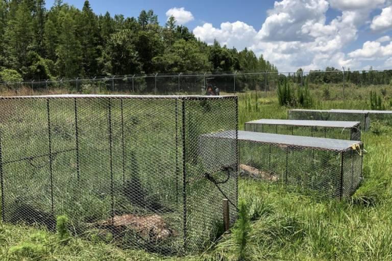 Alguns corpos são protegidos por gaiolas para evitar que sejam alvos de aves de rapina
