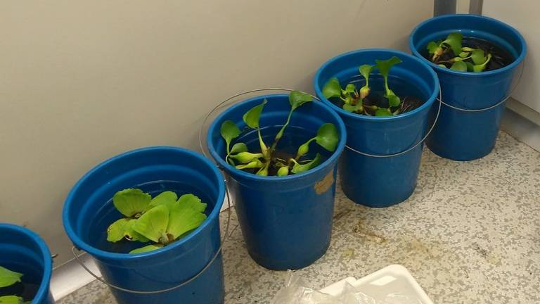 Plantas dentro de baldes azuis