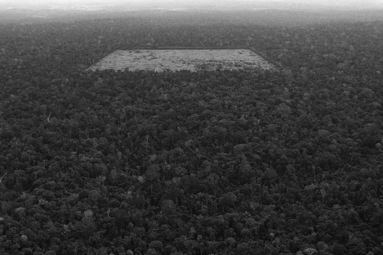 Área de floresta desmatada por madeireiros e fazendeiros para agricultura, em Santarém (PA)