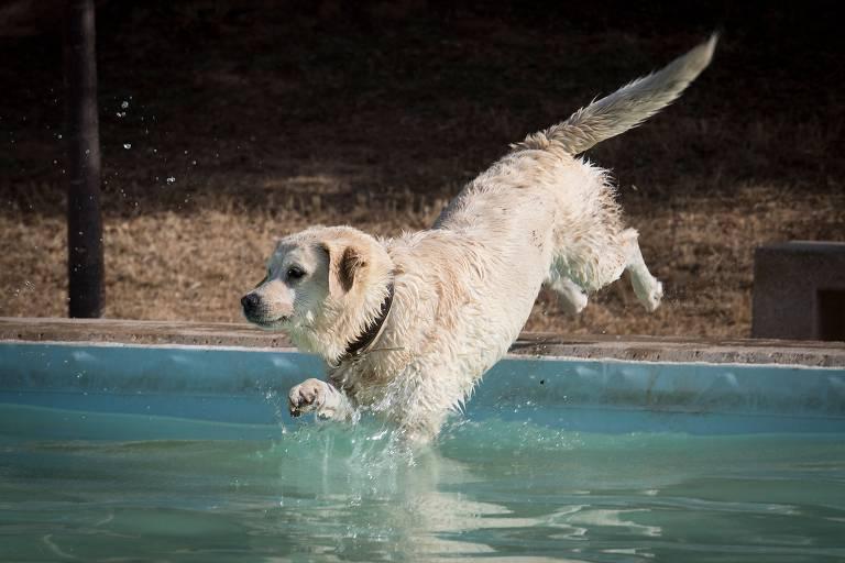 Veja imagens da semana, com cães, de 22 a 28 de junho