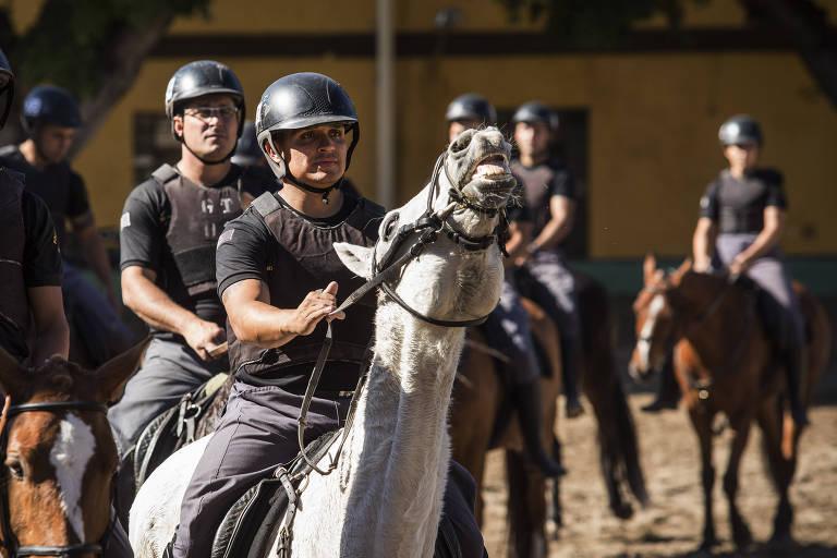 Os cavalos da Polícia Militar de São Paulo