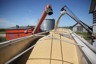 FILE PHOTO: A trailer is filled with soybeans at a farm in Buda, Illinois