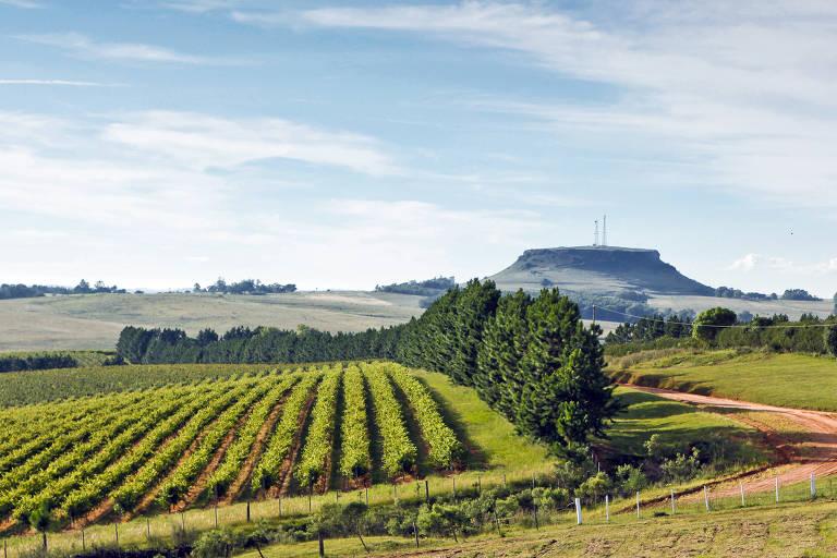 Turismo do Vinho pelo Brasil