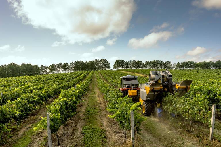 Produção global de vinho sofre redução por crise do coronavírus