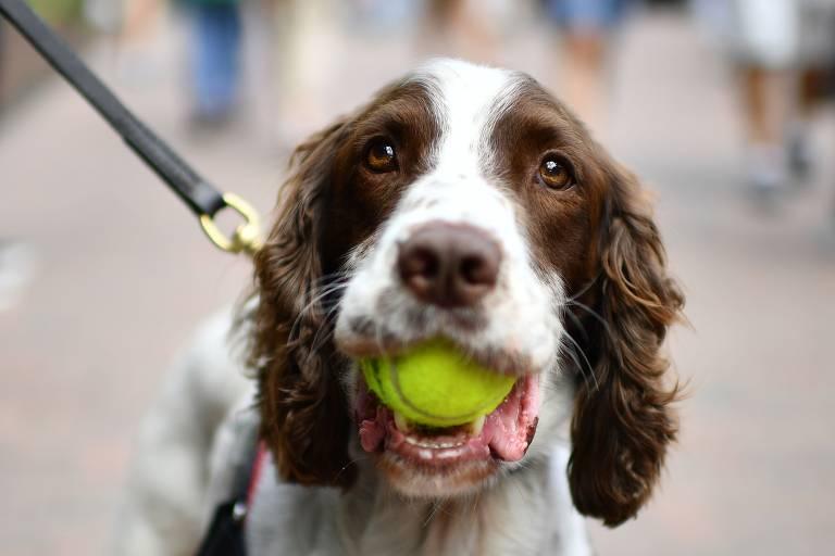 Veja imagens da semana, com cães, de 29 de junho a 5 de julho