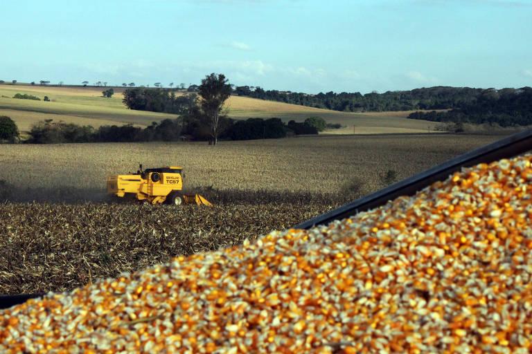 Milho na carroceria de caminhão em lavoura no norte do Paraná.