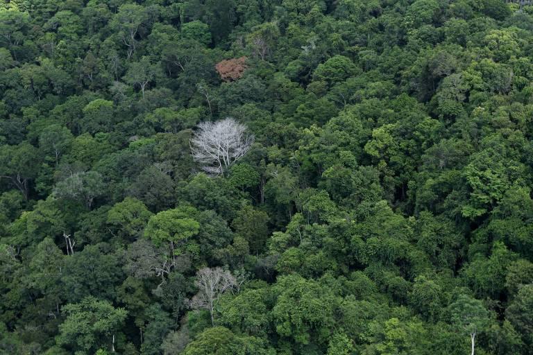 A Amazônia é o ecossistema com maior diversidade de espécies em um mesmo território, com 10% de todas as espécies conhecidas no mundo