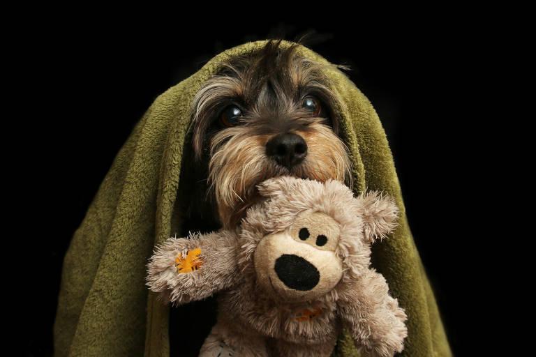 Foto de cão idoso leva prêmio internacional; veja ganhadores