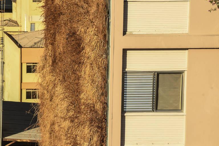 Sem manutenção, jardins verticais opõem condomínios e prefeitura