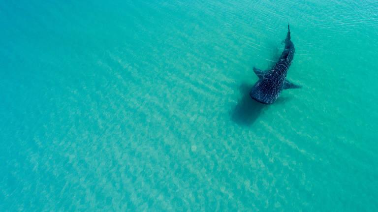 Baja California Sur, no México, é aquário que fica bem longe da vida real